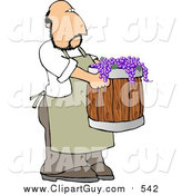 Clip Art of a White Man Harvesting Wine Grapes by Dennis Cox