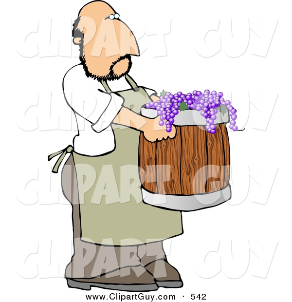 Clip Art of a White Man Harvesting Wine Grapes